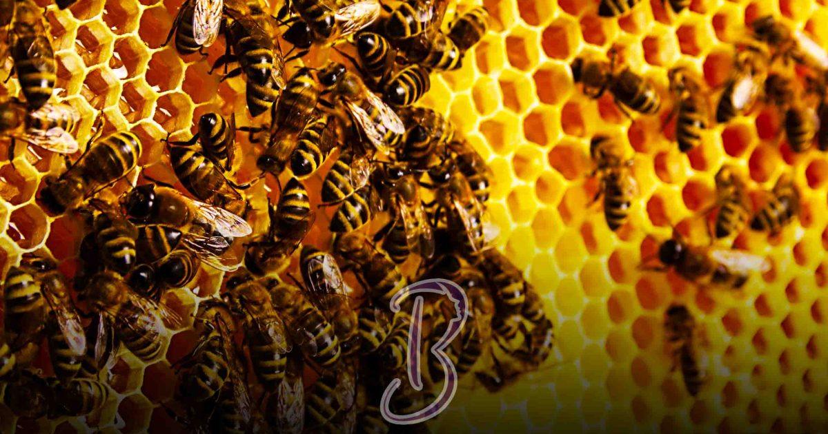 فوائد غذاء ملكات النحل على الريق