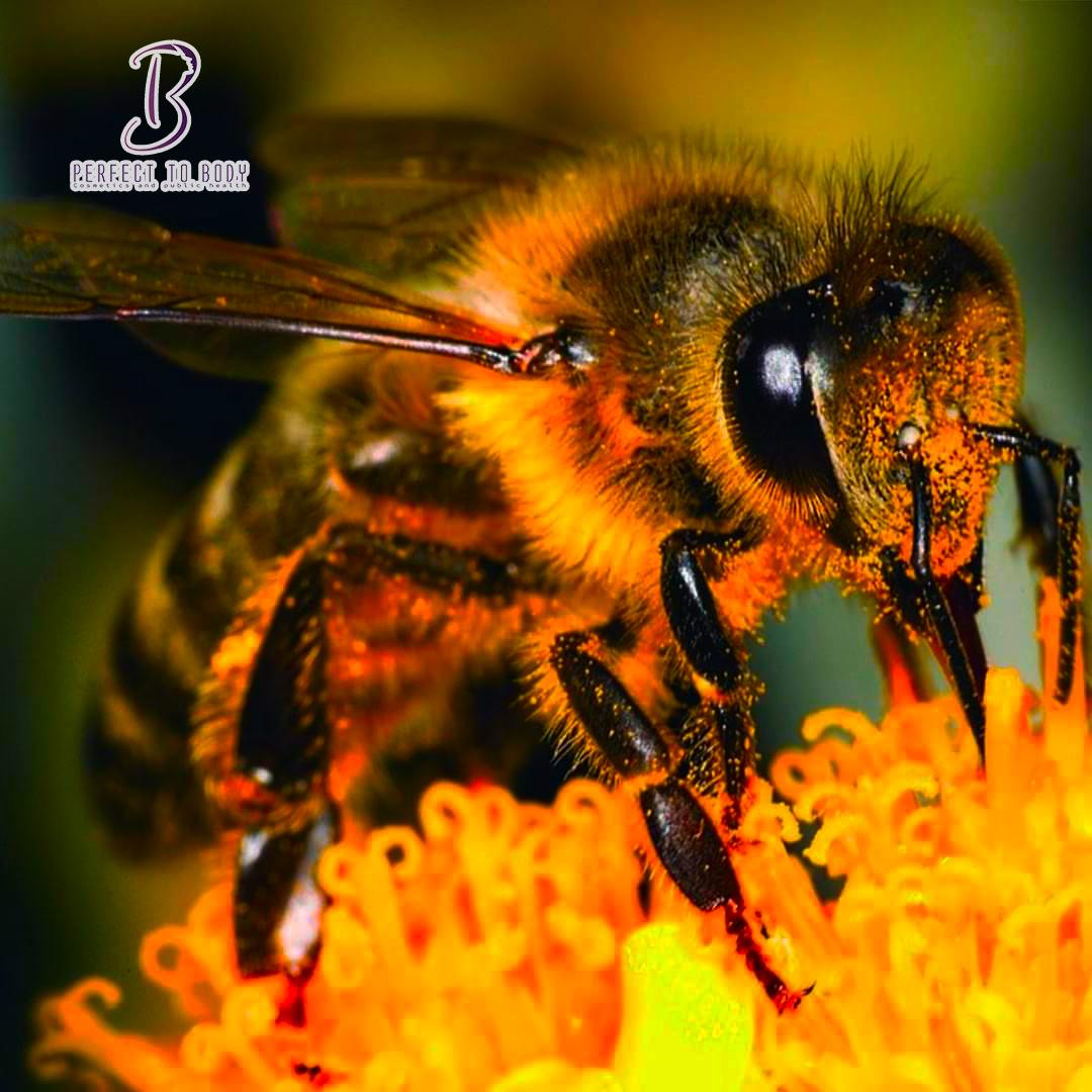 طرق استخدام سم النحل للشعر