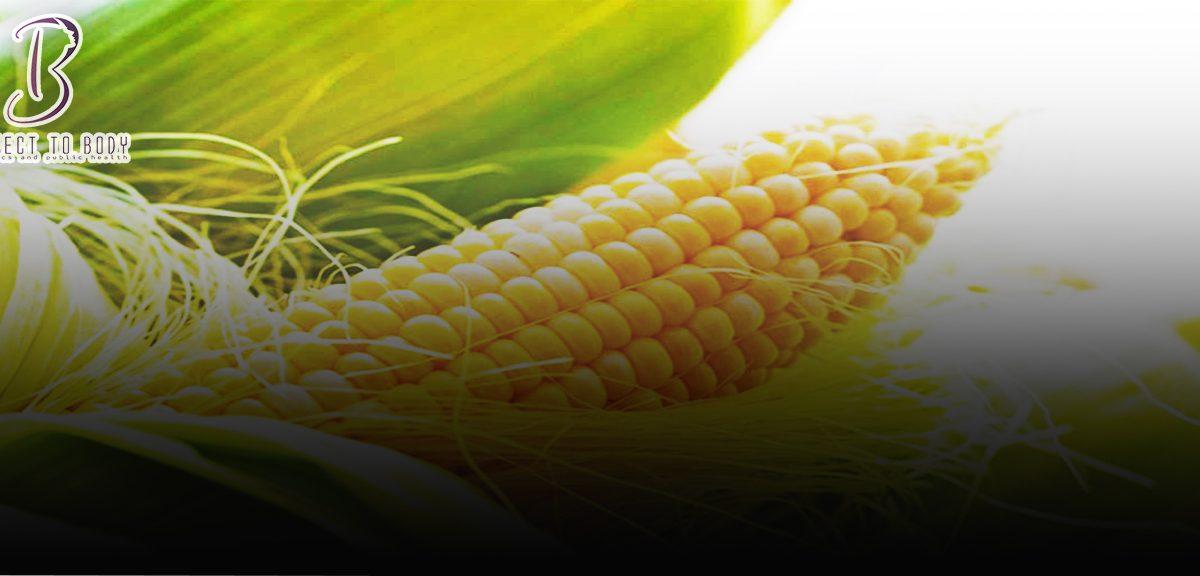 فوائد استعمال شعر الذرة للشعر