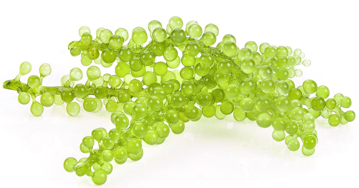 ماهى طرق علاج الكافيار الأخضر للشعر ؟